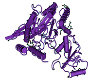 proteins-and-lysates-gentaur.png